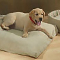 OMI-Green-Pet-Bed.jpg